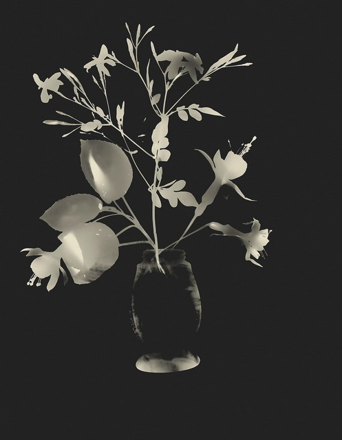 Flowers in a Vase (photogram), Montevideo