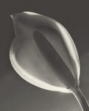 Tailflower (Solarization), Montevideo